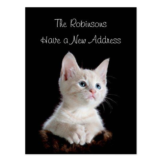 Cute Kitten New Address Postcard