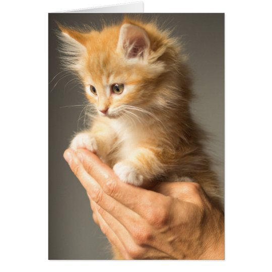 Cute Kitten on hands Card