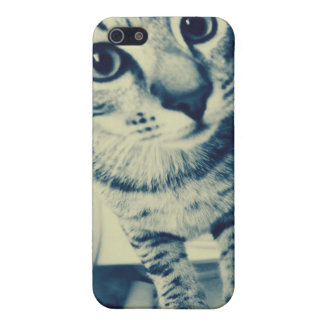cute kitten on iphone case for the iPhone 5