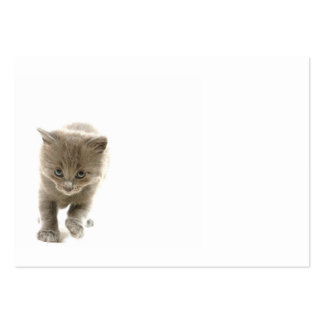 cute kitten pack of chubby business cards