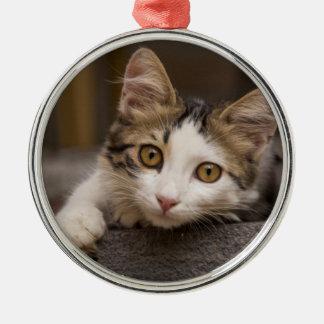 Cute kitten peeking out, Turkey Christmas Ornament