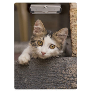 Cute kitten peeking out, Turkey Clipboards