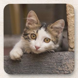 Cute kitten peeking out, Turkey Coaster