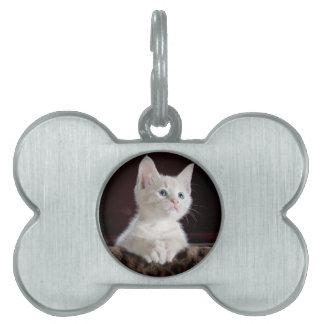 Cute Kitten Pet Name Tag