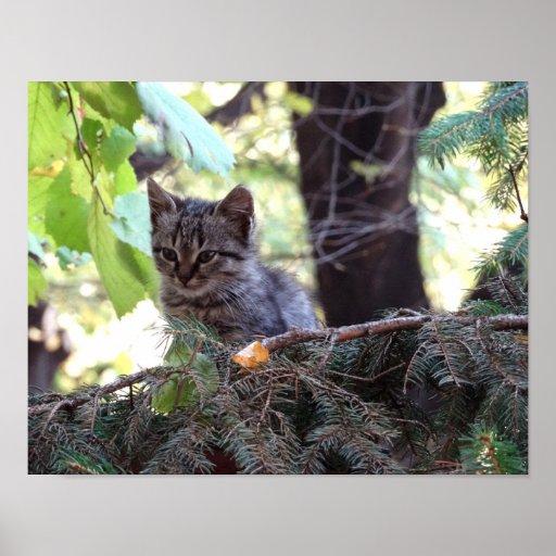 Cute Kitten Photo Value Poster Paper (Matte)