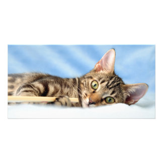 Cute kitten playing photo card template