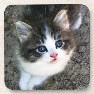 CUTE Kitten Portrait Coaster