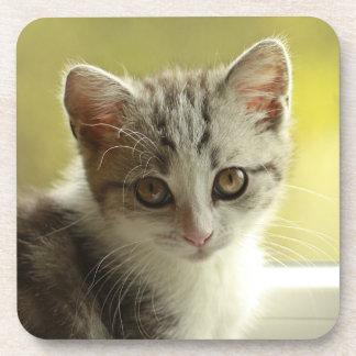 Cute kitten portrait beverage coaster