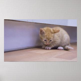 Cute Kitten Print