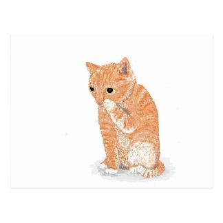 Cute Kitten  Products Postcard