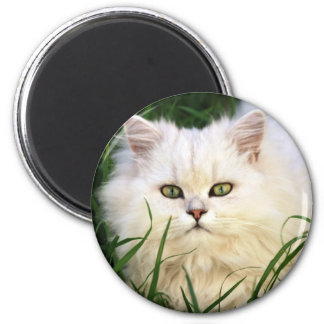 Cute Kitten resting 6 Cm Round Magnet