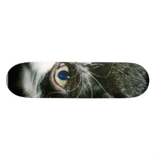 Cute Kitten Skateboard Deck