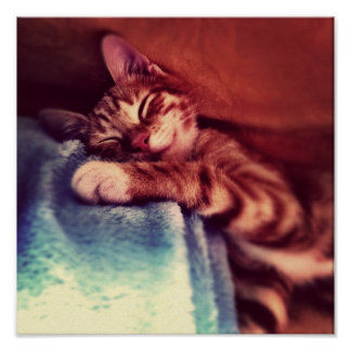 Cute kitten sleeping poster