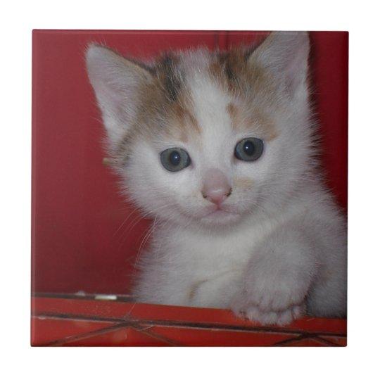 Cute Kitten Small Square Tile