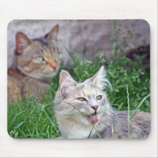 cute kitten sticking tongue out mouse pad