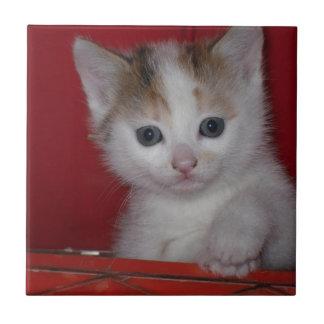 Cute Kitten Tile