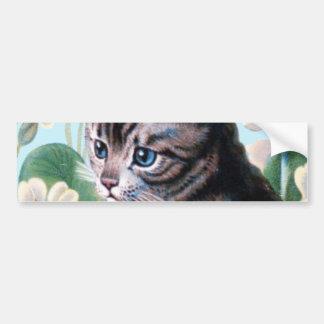 Cute kitten - vintage cat art bumper sticker