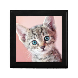 Cute kitten with blue eyes. gift box