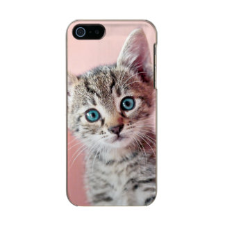Cute kitten with blue eyes. incipio feather® shine iPhone 5 case