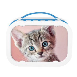 Cute kitten with blue eyes. lunch box