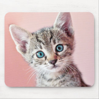 Cute kitten with blue eyes. mouse pad