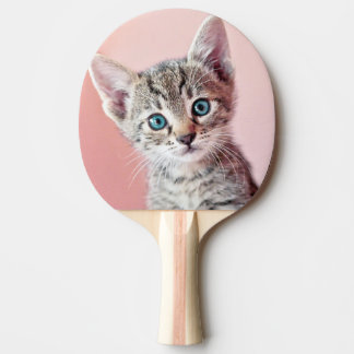 Cute kitten with blue eyes. ping pong paddle