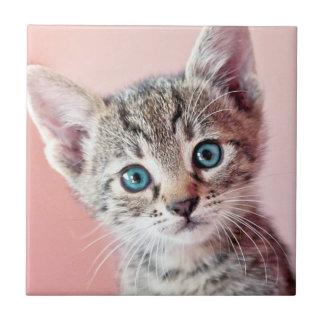 Cute kitten with blue eyes. tile
