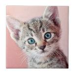 Cute kitten with blue eyes. tiles