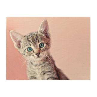 Cute kitten with blue eyes. wood wall art