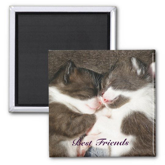 Cute kittens best friends customisable magnet