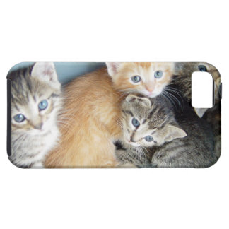 Cute Kittens iPhone 5 Cover