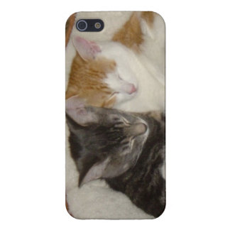 Cute kittens cuddleing-iipone5 case case for iPhone 5/5S