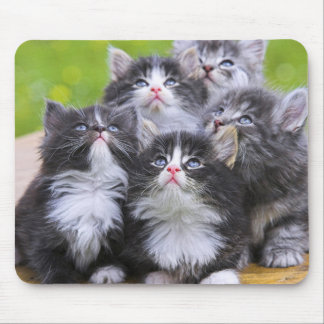 Cute Kittens Mouse Mat