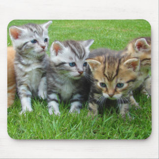 Cute kittens sitting in grass mousepads