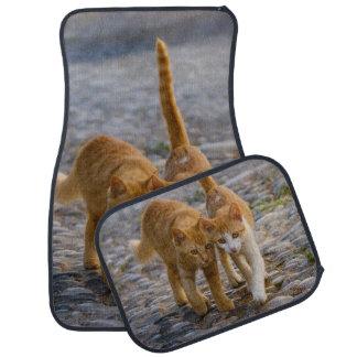 Cute Kittens Walk the Same Path Photo - floor-mats Car Mat
