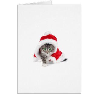 Cute Kitty! Greeting Card