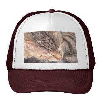 Cute Kitty Mesh Hats