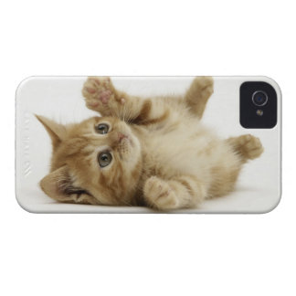 Cute Kitty iPhone 4 Cases