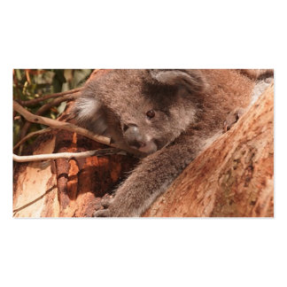 Cute koala 1214 business cards