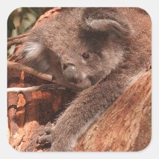 Cute Koala 1214 Square Sticker