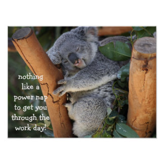 Cute Koala Bear Poster (16x12), Power Nap