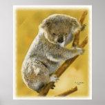 Cute...Koala Bear...Poster and Print! Poster