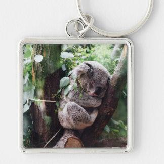 Cute Koala Bear relaxing in a Tree Key Ring