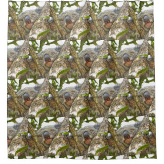 Cute Koala Bear Shower Curtain