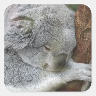 Cute Koala Bear Shower Office Party Square Sticker