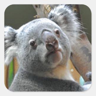 """Cute koala bear"" Square Sticker"