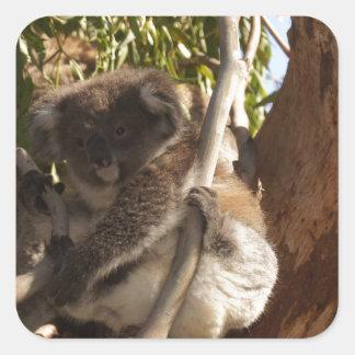 Cute Koala Bears Aussi Outback Safari Nature Art Square Sticker