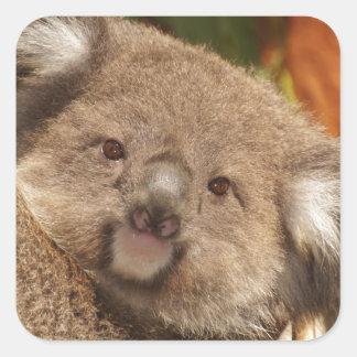 Cute Koala Bears Aussi Shower Party Birthday Square Sticker