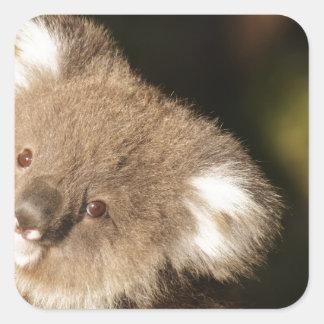 Cute Koala Bears Party Shower Birthday Square Sticker
