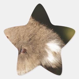 Cute Koala Bears Party Shower Birthday Star Sticker